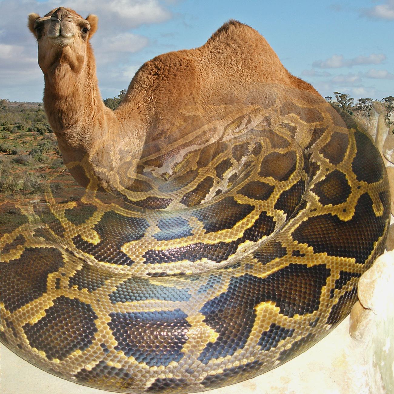camel+snake